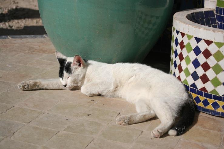 Cat Gutsy Women