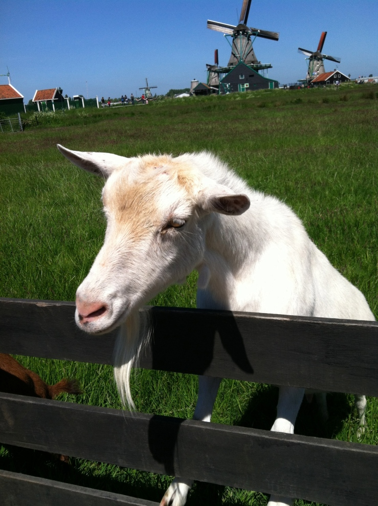 Goat Travel Holland
