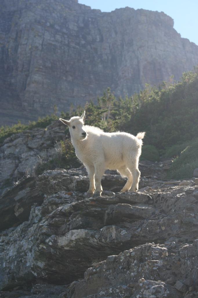 Baby Goat Glacier