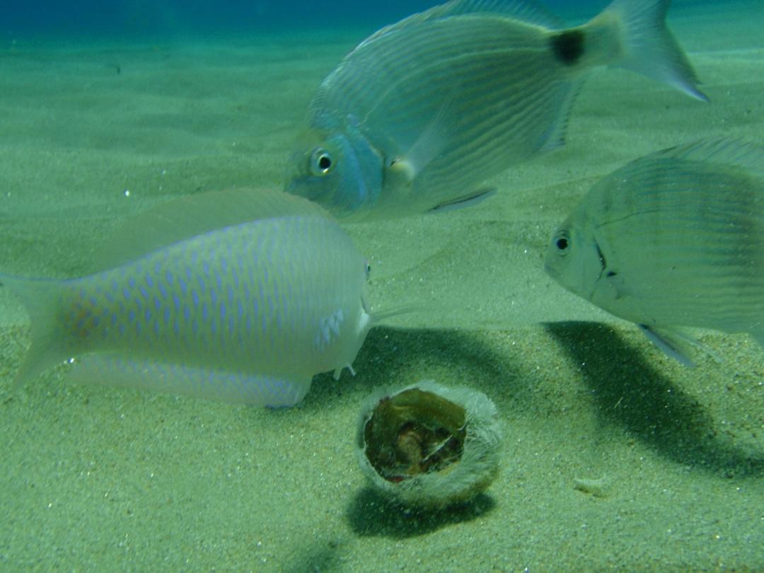 Fish Snorkeling Greece