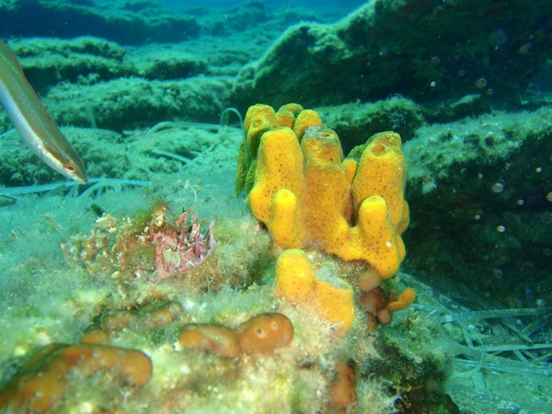Coral Greece Snorkeling