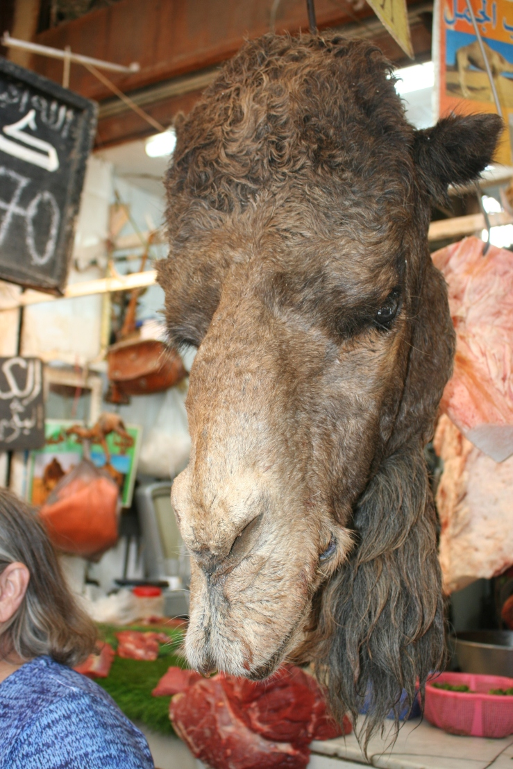 camel food morocco