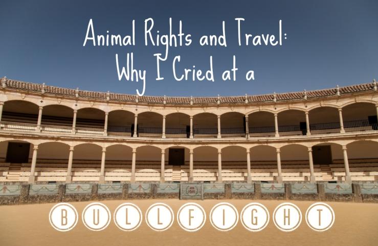 Bullfight Spain Seville