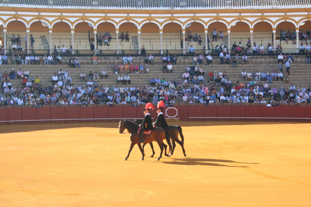 horses bullfight seville