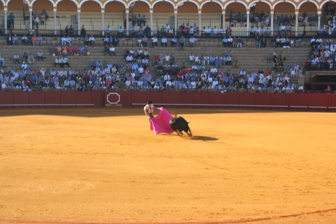 bullfight arena seville