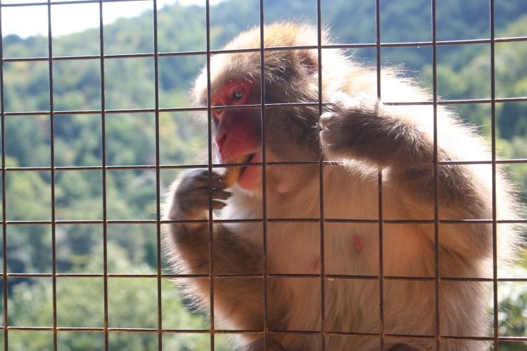snow monkey kyoto