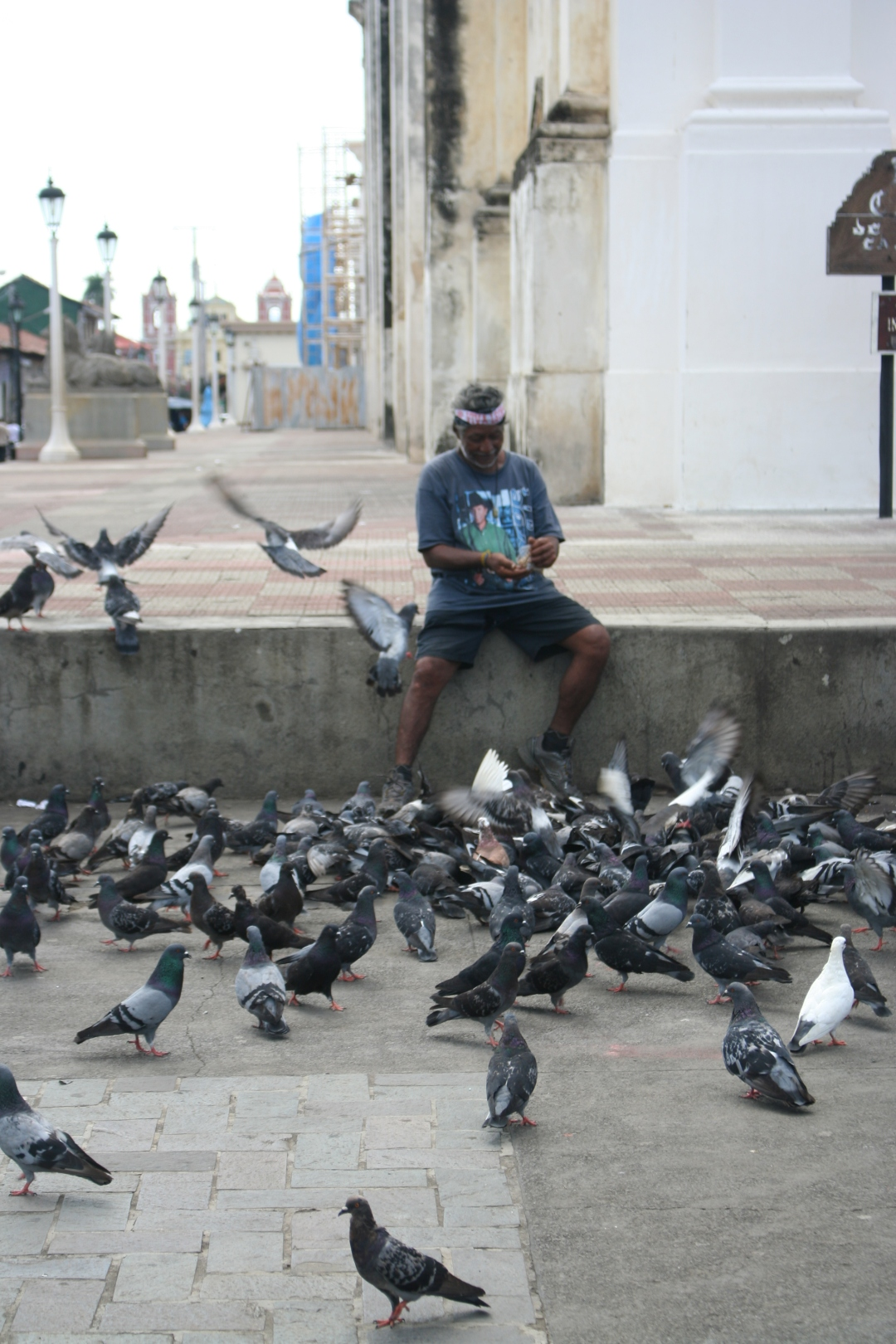 cathedral leon pigeons