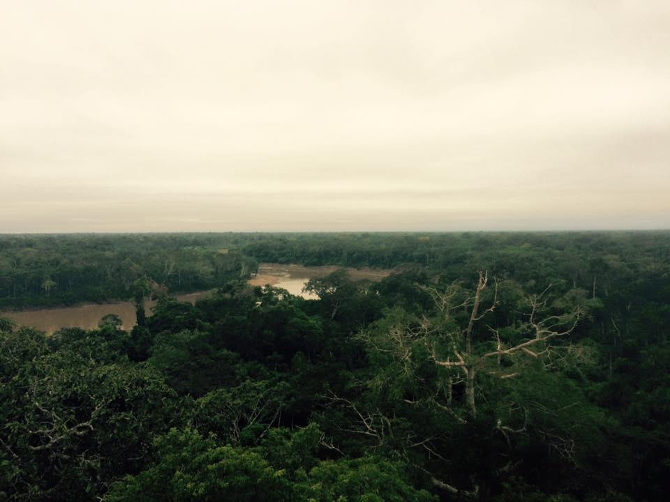 amazon jungle peru